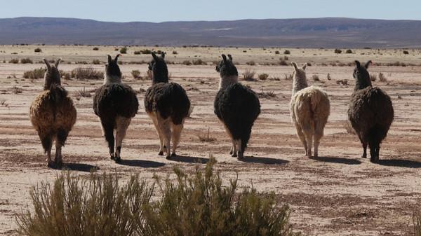 Adventures on the Altiplano